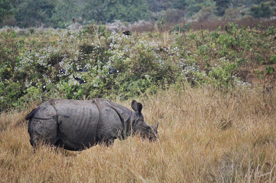 Manas National Park   Story of ex-poachers