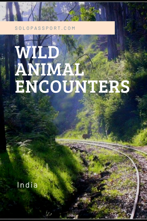 Wild Animal Encounters