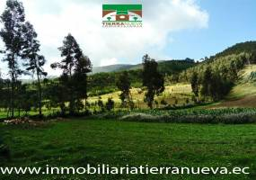 """Oportunidad, en venta hermosa quinta con terreno de 4 hectáreas en Zuleta, a solo 30 minutos de Cayambe, Ibarra y Otavalo; tiene una hermosa vista al nevado Cayambe, todas las comodidades para vivir en el campo, alejado de la contaminación y ruidos de la cuidad.  La casa tiene una dimensión de 150 m2, está distribuida en: cuatro dormitorios, dos baños completos, estudio, sala, comedor, cocina y porch. Tiene amplios ventanales, el entrepiso es de madera, chimenea bosca que cubre un área de 150m2 (toda la casa) el ducto es para el primer y segundo piso. La propiedad es óptima para una agricultura ecológica y además están plantados más de MIL ÁRBOLES entre alisos, cepillos, pumamakis, yaguales, acacias entre otros, además cuenta con un bosque de eucalipto y árboles de pino. El camino de acceso es asfaltado y unos pocos metros camino de tierra, el paisaje es maravilloso, la comunidad muy tranquila con gente trabajadora y vecinos amables.Para mayor información y ventas visítanos en nuestra oficina:  INMOBILIARIA TIERRA NUEVA Dirección Cayambe, Av. Natalia Jarrín y Bolívar – Paseo Comercial """"El Redondel"""" Local #20  Teléfonos: fijo: (02) 2111 9 Whatsapp:  593980247008 https://chat.whatsapp.com/HfA6fXdTBcq7LDQ4iW1esD Email: cayambe@inmobiliariatierranueva.ec Website: www.inmobiliariatierranueva.ec CAYAMBE–ECUADO"""