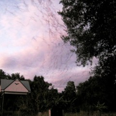 Things to do in Gainesville: Visit the University of Florida Bat House and Barns!