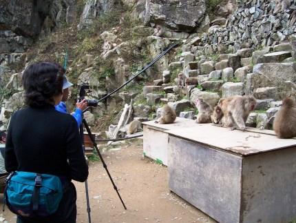 Monkeys Pose for Photographers in Jigokudani Wild Monkey Park