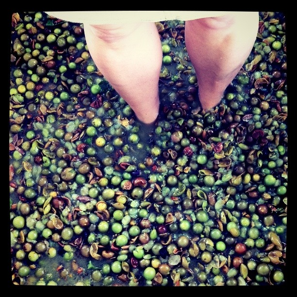 Doing My Part for Foot Stomped Wine, Henscratch Farms, Lake Placid, Fla.