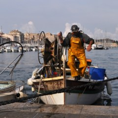 Travel to France: A Walk through the Marseille Fish Market