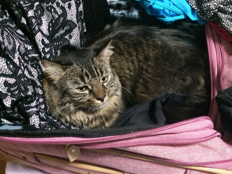 I Caught My Cat China Trying to Stowaway in my Luggage!