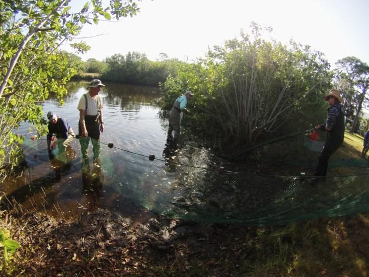 Lemon Bay Conservancy Volunteers and the 600 Foot Seine Net.