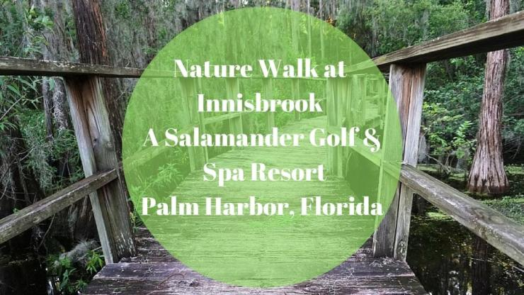 Click to Come Along on a Nature Walk at Innisbrook.
