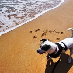Pet-Friendly Florida: Flagler Beach