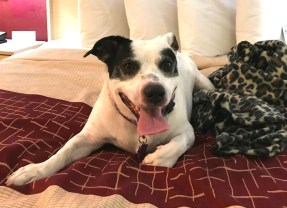 Pet-Friendly Florida: I Stayed at a Red Roof PLUS+ Hotel and Cannot Believe the Experience I Had