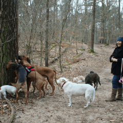 Things to do in Berlin: Walking in the Woods with a Pack of Dogs