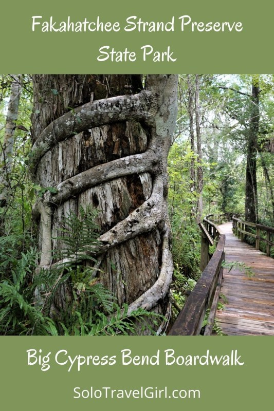Feel Free to Share this Post About Fakahatchee Strand Preserve State Park on Pinterest!
