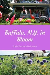Pin it! Buffalo in bloom.