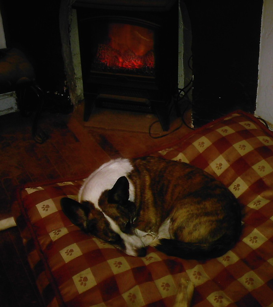 Stoney snoozing by the fire