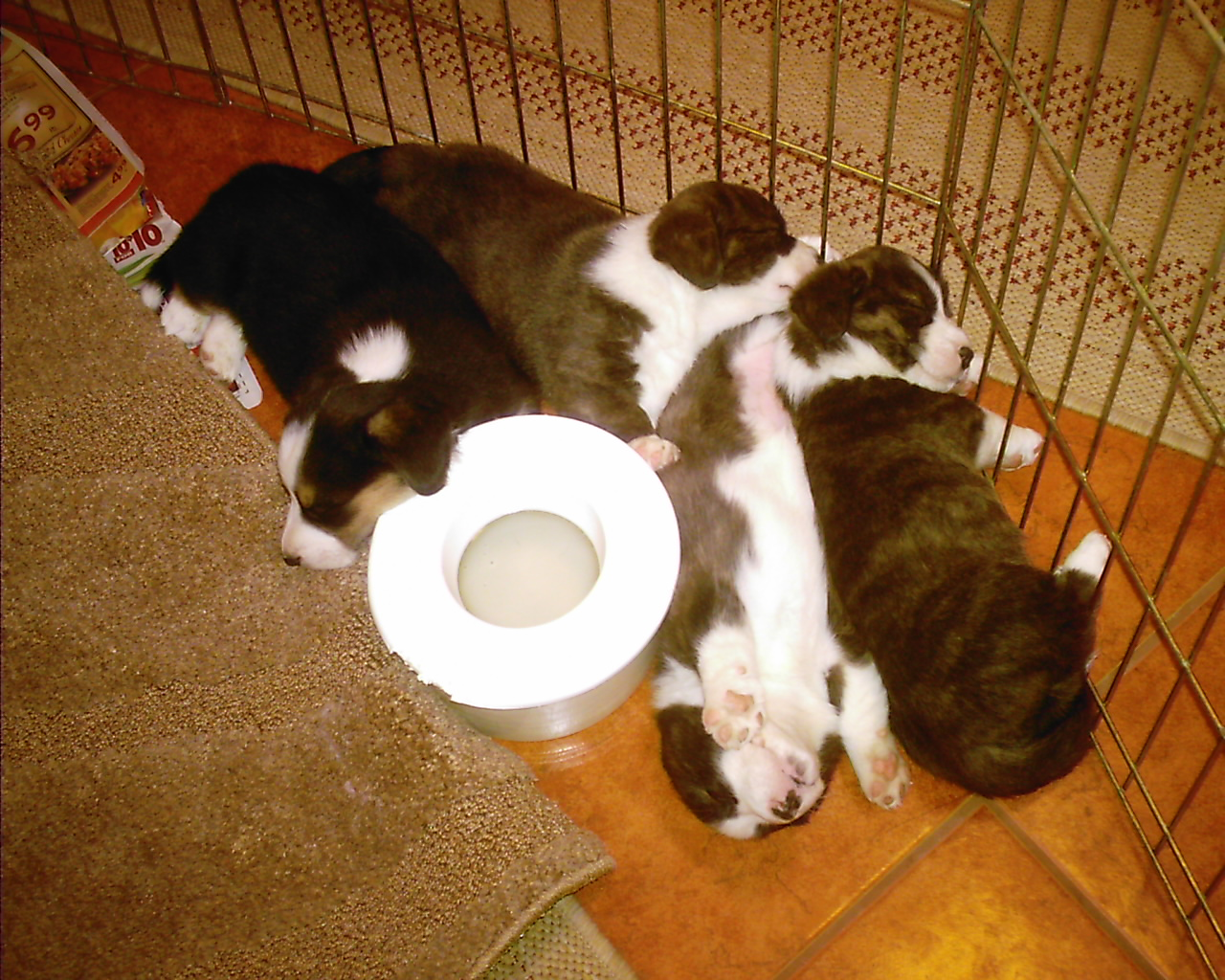 Why is a sleeping puppy pile so darn cute!
