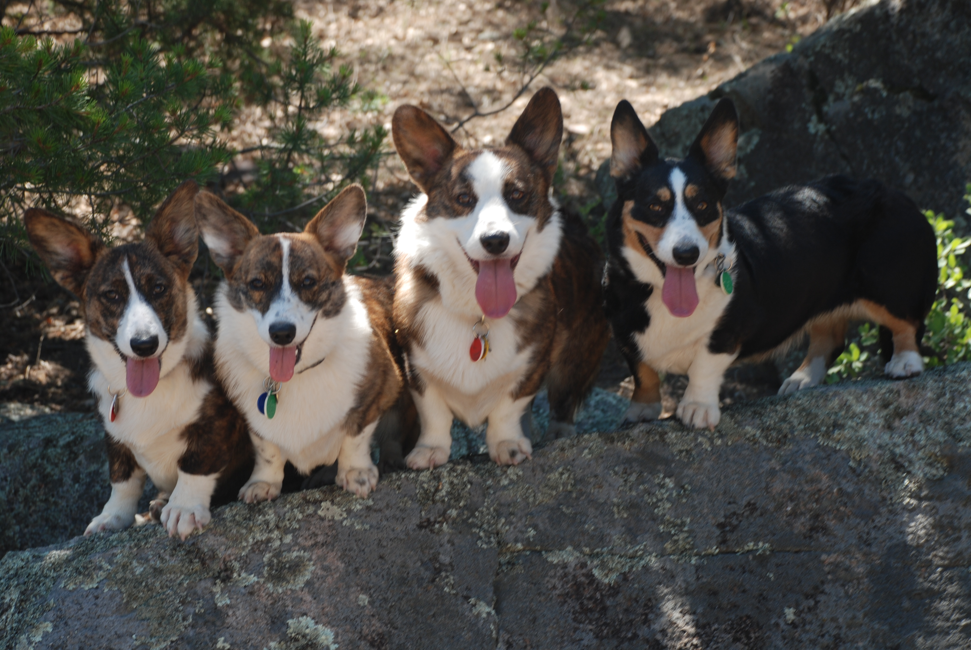 Bailey, Frost, PJ and Lindy