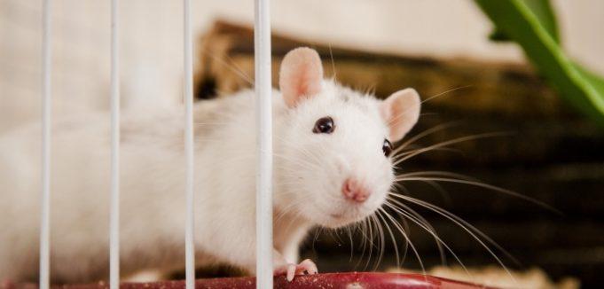 Jasa Pengusir Tikus di jakarat