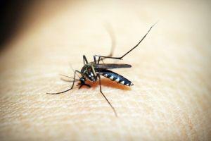 Tips Agar Rumah Tidak Jadi Sarang Nyamuk