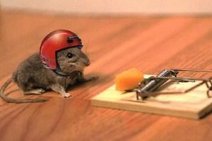 Kenapa Tikus Bisa Masuk ke Rumah