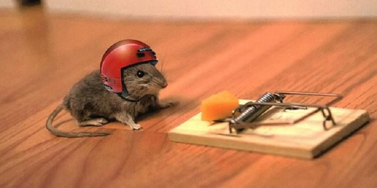 kenapa tikus masuk kerumah