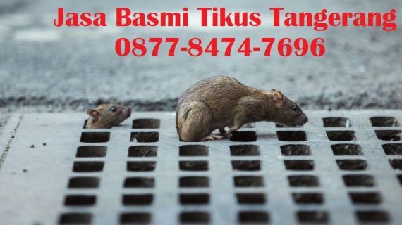 Jasa Basmi Tikus Tangerang