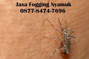 Jasa Fogging Nyamuk