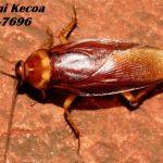 Jasa Pembasmi Kecoa