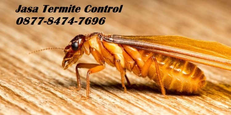 jasa termite control