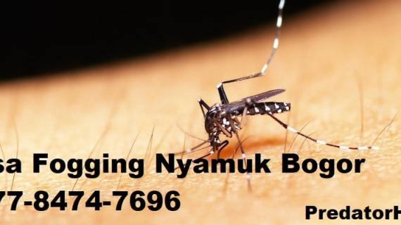 Jasa Fogging Nyamuk Bogor