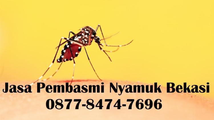 jasa pembasmi nyamuk bekasi