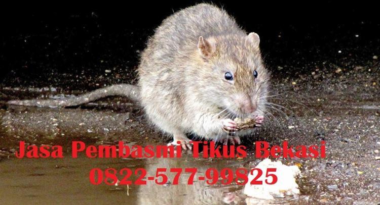 jasa pembasmi tikus bekasi