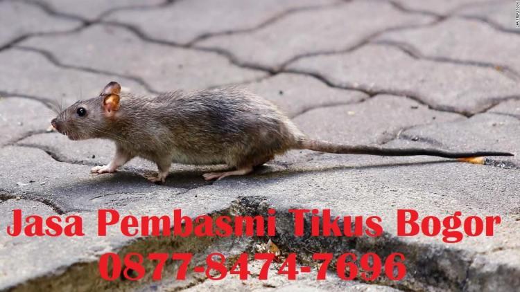 jasa pembasmi tikus bogor