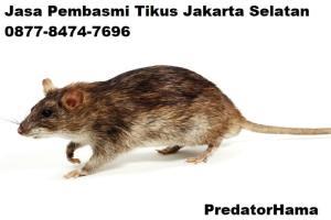 Jasa Pembasmi Tikus Jakarta Barat