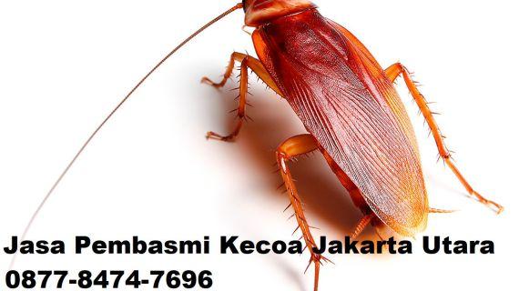 Jasa Pembasmi Kecoa Jakarta Utara