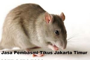 Jasa Pembasmi Tikus Jakarta Timur