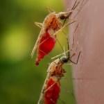 தீங்குயிரி ஒழிக்கும் மரபணு அறிவியல்