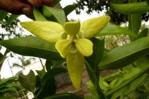 5_flower_from-below7001