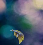yellow_Leaf_Fall_Colors_Tree_Deciduous_Autumn_Focus
