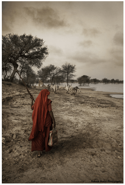 Woman_Lady_India_Arid_Cows_River_Bharat_Naari_She_Represent_Feminism