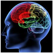 Human_Brain_Neurons_Connections_Visual_Amyglada