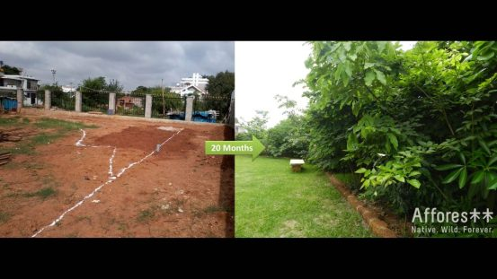 Forest_Backyard_Plants_Trees_India_Positive_News_Green_Environment_Backyard_Grass_Before-and-After1