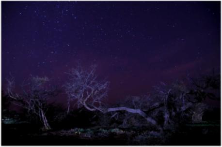 Blue_Stars_Night_Fall_Tree_Autumn_Leaves_Barren