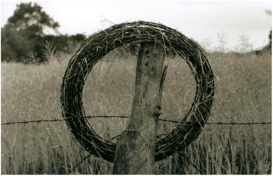 Gated_Thorns_Kambi_Mul_Crowns_Adornments_Circles_Rings_Women_Female