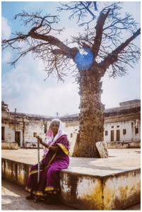 Old_Indian_Woman_Tree_Lone_Female_She_Aged_Senior_Citizens