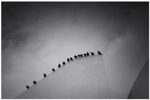 Birds_Row_Wait_Flock_line
