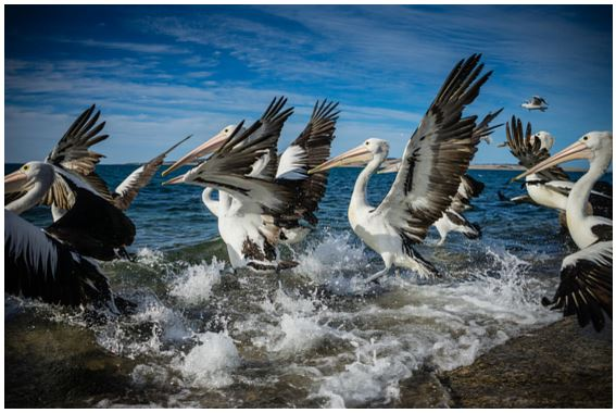 Birds_Seagulls_Flutter_Ocean_Water_Escape_Fly_Heart