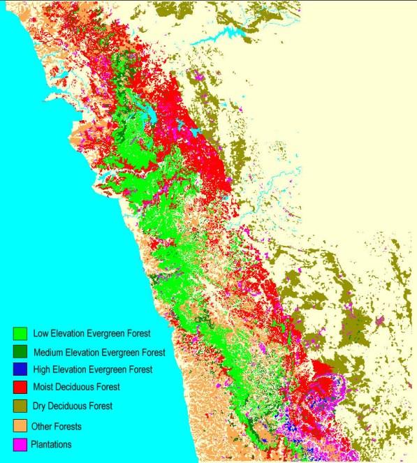 Western Ghats_Forest_Vegetation_Trees_Plants_WG_KErala_TN_Karnataka