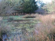 Pow Wood wetland