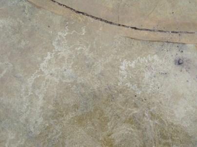 The radula-marks of feeding limpets