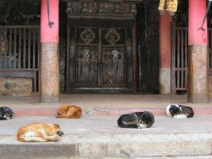 Kumbum Stupa temple dogs - Tibet