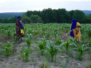 Somali Bantu - 2 women in the field at Liberation Farms