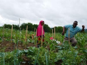 Somali Bantu farming at Liberation Farms